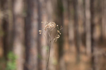 Bouquet of dried weeds growing in the forest