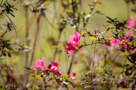Blooms on a pink flower in a meadow 版權商用圖片
