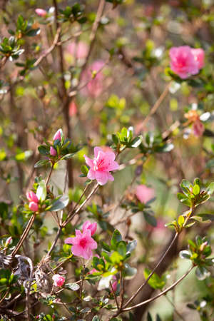 Pink flowers blooming on a bright, warm day 版權商用圖片