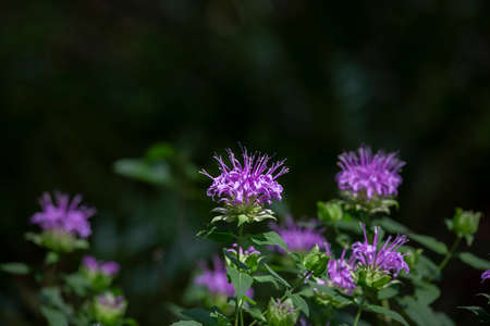 Close up of purple blooms in a field of flowers