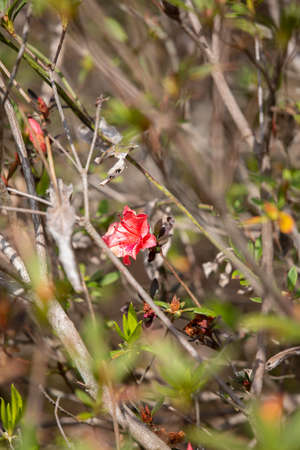 Red flower blooming alone in a field on a nice day 版權商用圖片