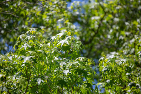 Deep green leaves on a tree during a clear blue day 版權商用圖片