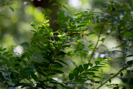 Close up of the bright green leaves of a bush