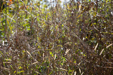 Tall, dry grass dying and turning red and brown 版權商用圖片