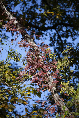 Red leaves growing on a tree during the autumn season