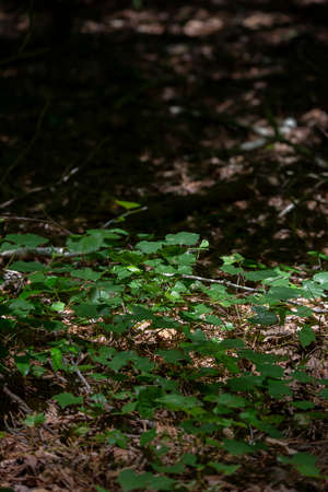 Green overgrowth covering the opening of a forest floor