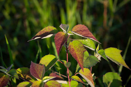 Lush green and red plants growing in a lush green marshland 版權商用圖片