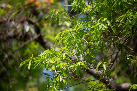 Bright, oval green leaves growing on a tree