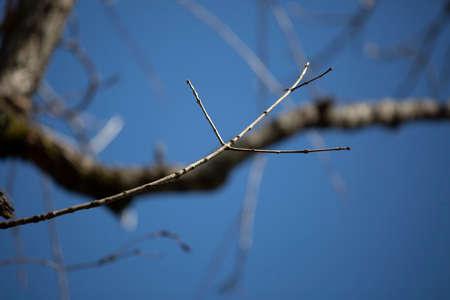 Tree twig jutting out into a deep blue sky 版權商用圖片