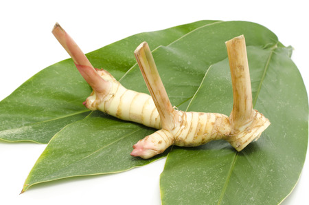 galangal: Fresh galangal on green leaves