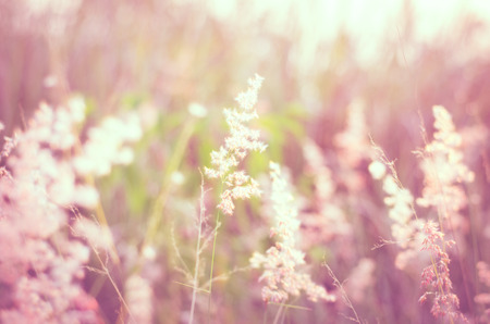 natal: Natal grass in soft warm light meadow, blurry abstract natural background. Stock Photo