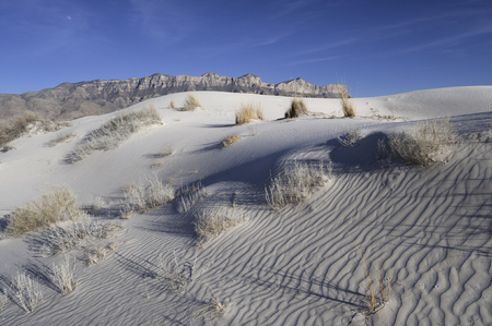 fossilized: Salt Basin Dunes in Guadalupe Mountains National Park Stock Photo