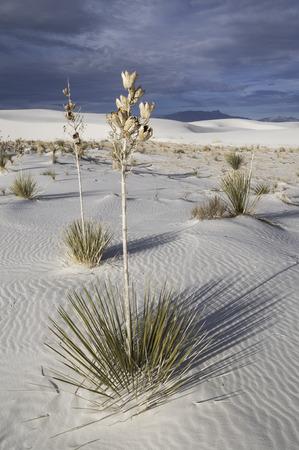 white sands national monument: White Sands National Monument