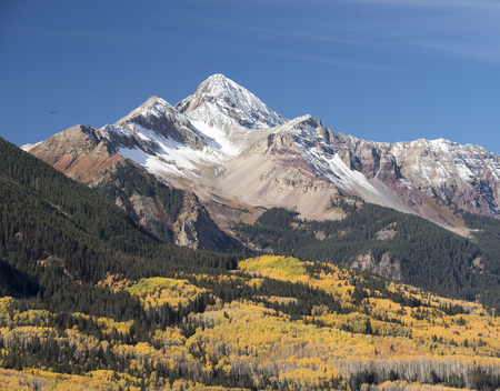 aspen tree: Wilson Peak a Colorado Fourteener