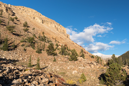 National Heritage Area Colorado with Ancient Limber Pine and Bristle Cone Pine Trees.