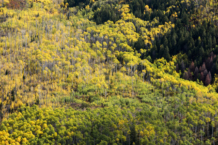 View from McClure Pass is an aspen grove within the White River National Forest in the Crystal River Valley.