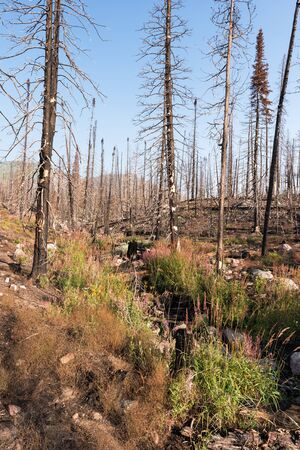 Routt National Forest Recreation Area with Big Creek Lakes and campground on the edge of Mount Zirkel Wilderness. Post-fire view of Beaver Creek Fire of 2016.