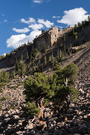 A  grove of ancient Limber Pine and Bristle Cone Pine trees located in the Mosquito Range of in the state of Colorado. South Park National Heritage Area has a 1.5 mile trail patrons can walk.