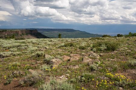 View Point on Grand Mesa National Forest Colorado has over 300 lakes. Wild flowers are in abundance in early summer.