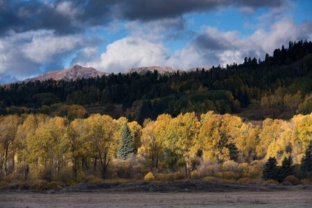 Autumn gold in the Weminuche Valley with High Mountain peaks dominating the horizon. An early morning storm clears with dramatic lighting. Standard-Bild