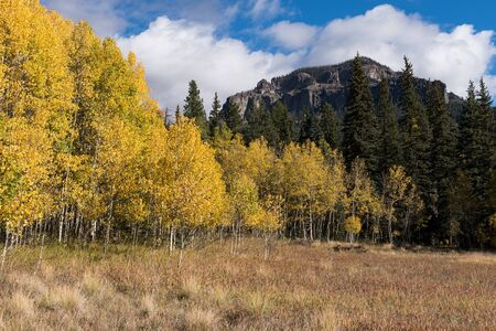 Autumn gold in the Cimarrona Valley with  mountain peaks dominating the horizon. Located within the San Juan National Forest, Colorado.