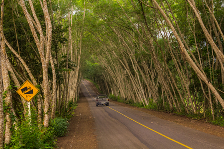 Tree tunnel ,Kaeng Krachan, Thailand, This is an arch formed by trees bending towards each other on both sides of the road.