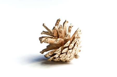 pine cone: Pigna in oro