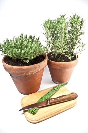 Rosmary and thyme