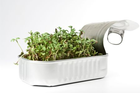 Watercress in a tin can photo