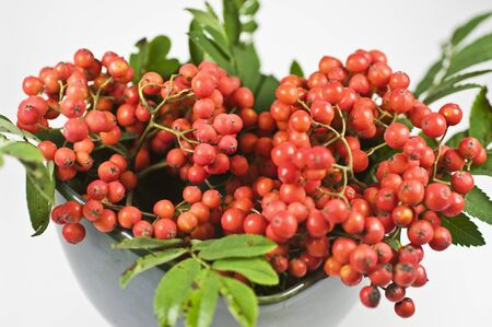 sorb: Mountain ash berry in a green bowl