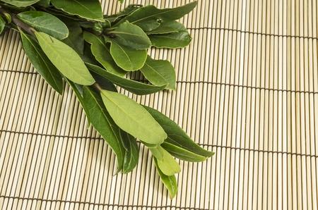 Bunch of fresh bay leaf Stock Photo