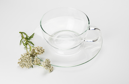 Empty teacup and common yarrow photo