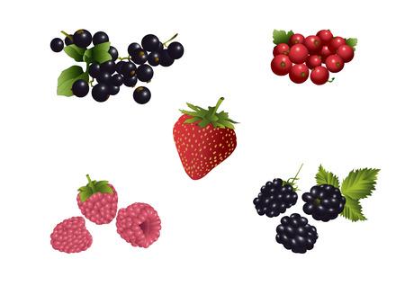 Several Sorts of Soft Fruits Vector