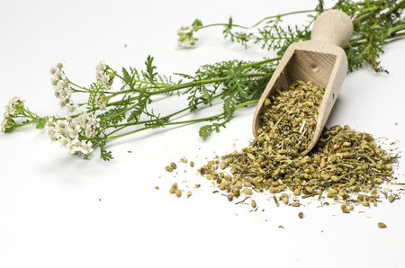 Fresh and dried yarrow with a wooden shovel photo