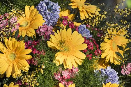 gebera: Yellow gerbera Stock Photo