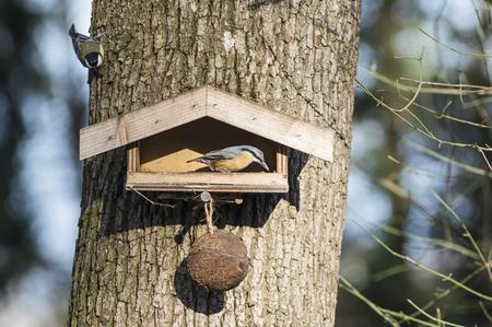 Nuthatch in a birdfeeder