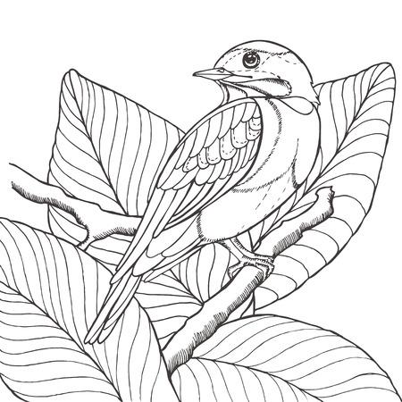 ave del paraiso: Boceto de pájaro tropical sentado en la rama de hojas. Imitación dibujo a lápiz. ilustración vectorial