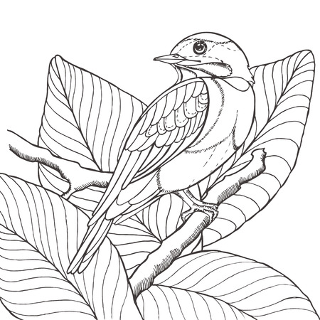 pencil plant: Sketch of tropical bird sitting on branch in leaves. Imitation pencil drawing. Vector illustration