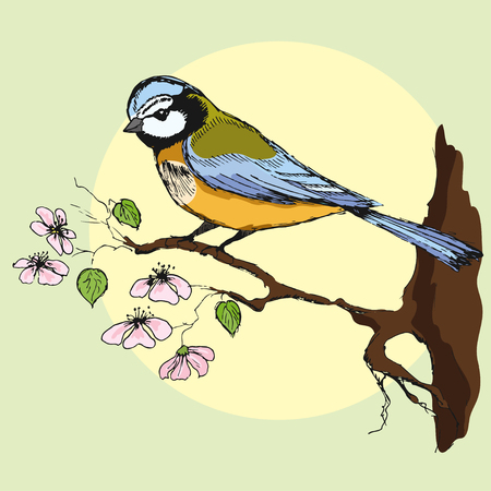 tomtit: Colorful hand drawn illustration of titmouse sitting on a flowering branch. Vector illustration