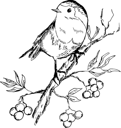 Sketch of bird sitting on a branch with berries. Vector illustration