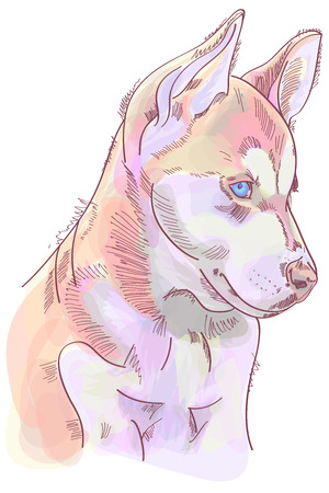 Digital illustration of cute huskies puppy in pastel summer colors. Watercolor technique 스톡 콘텐츠