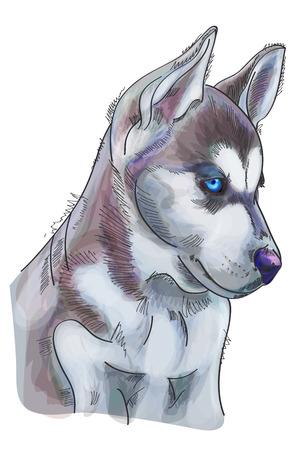 Hand drawn watercolor Siberian Husky on white background. Vector illustration eps 10 Vettoriali