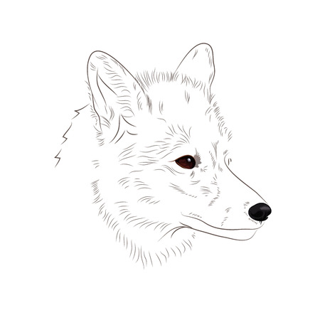 Hand drawn fox head outline on white background. Vector illustration