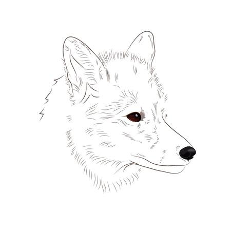 Mano dibuja el contorno de la cabeza de zorro en el fondo blanco. Ilustración vectorial Foto de archivo - 69116339