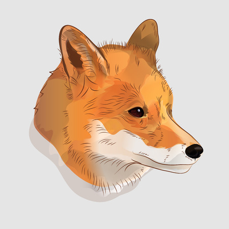 Illustrative portrait of a red fox. Digital illustration
