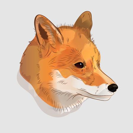 Retrato ilustrativo de un zorro rojo. ilustración digital Foto de archivo - 71638905
