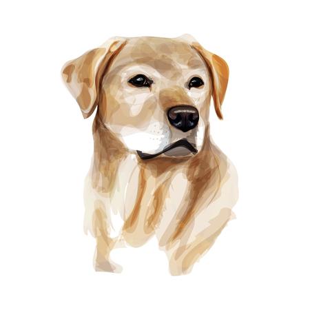 黄色犬種ラブラドールレトリーバーのデジタル イラストです。水彩の模倣