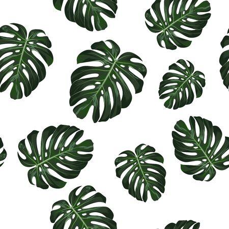 Monstera tropical deja patrón transparente sobre fondo blanco. ilustración vectorial Foto de archivo - 73450054