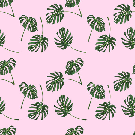 Monstera Tropical leaves seamless pattern on pink background. Vector illustration