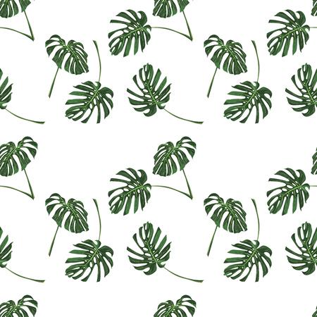 Monstera Tropical leaves seamless pattern on white background. Vector illustration 일러스트